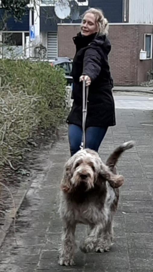 Help!Mijn hond sleept mij door de straat.